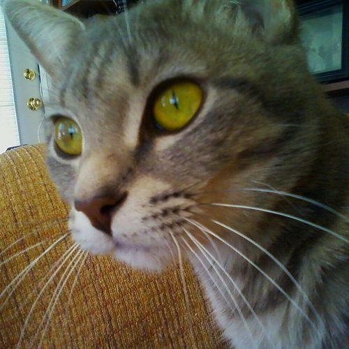 Denise Mange: Pets as Ascension Guides